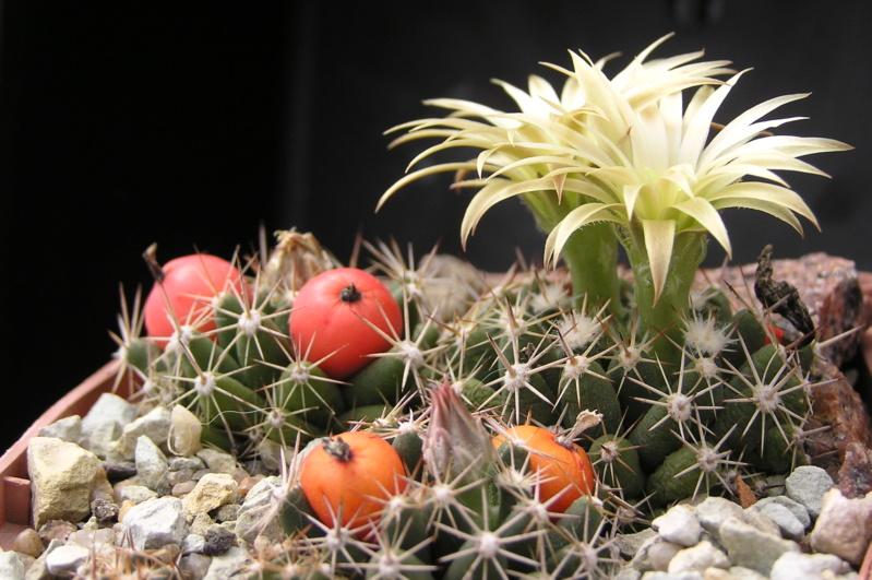 Cactus under carbonate. 19. Esc_ne10