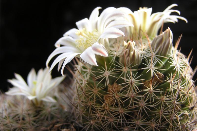 Cactus under carbonate. 20. Fm_coa10