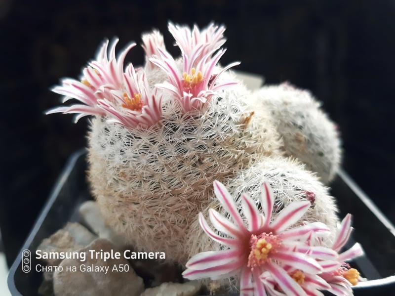 Cactus under carbonate. 20. Fm_her10