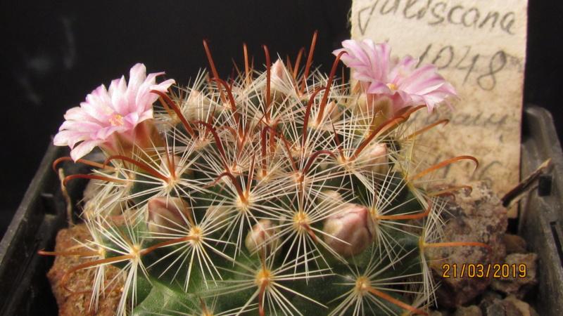 Cactus under carbonate. 18. Img_0811