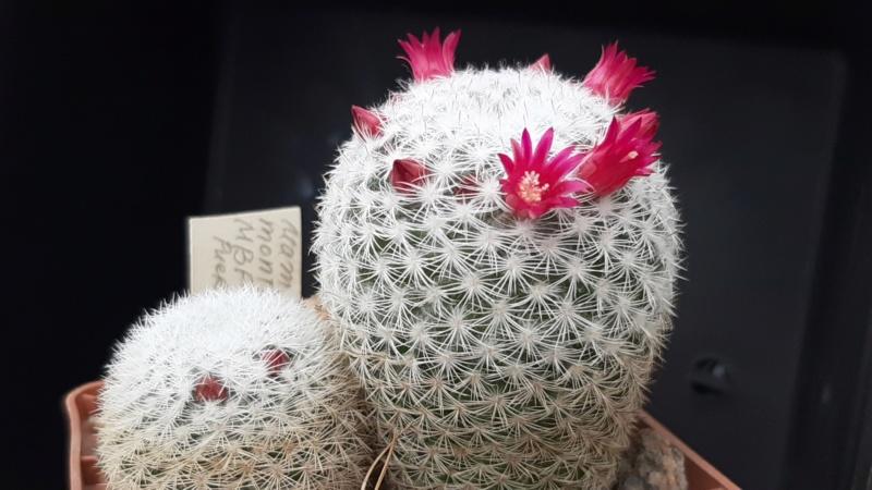 Cactus under carbonate. 18. M_201910