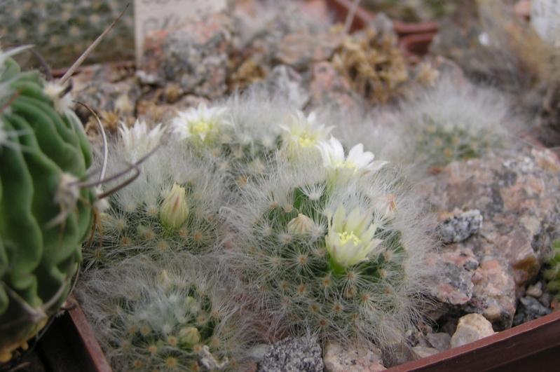 Cactus under carbonate. 17. Started! M_albi10