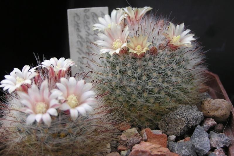 Cactus under carbonate. 18. M_boca10