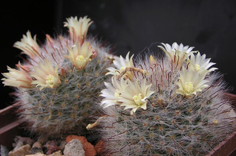 Cactus under carbonate. 18. M_boca11