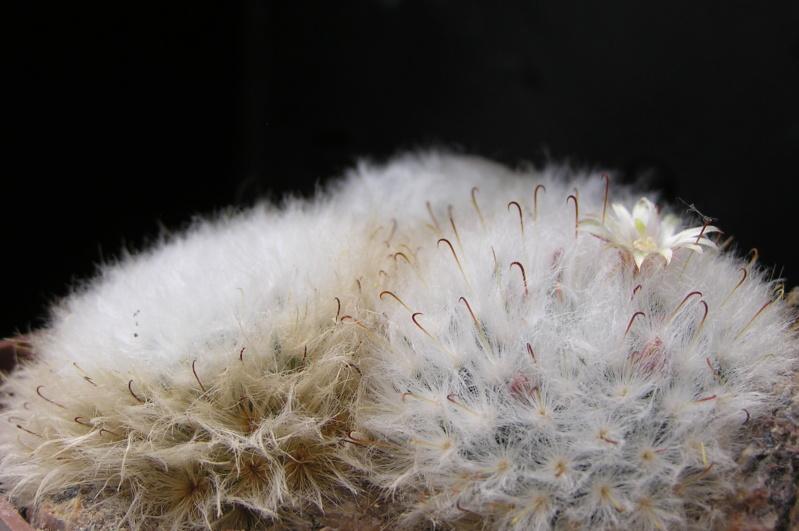 Cactus under carbonate. 18. M_boca12