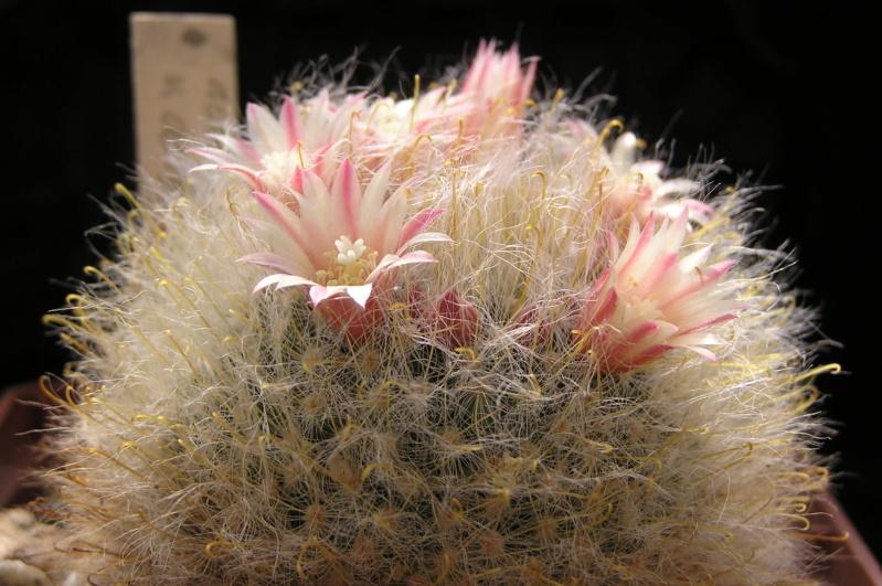 Cactus under carbonate. 20. M_boca17