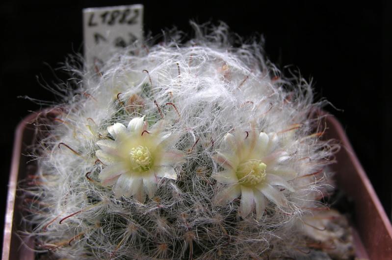 Cactus under carbonate. 20. M_boca18