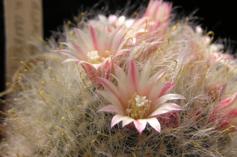 Cactus under carbonate. 20. M_boca19