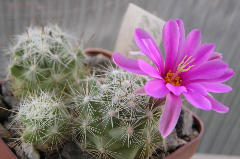 Cactus under carbonate. 17. Started! M_bool11