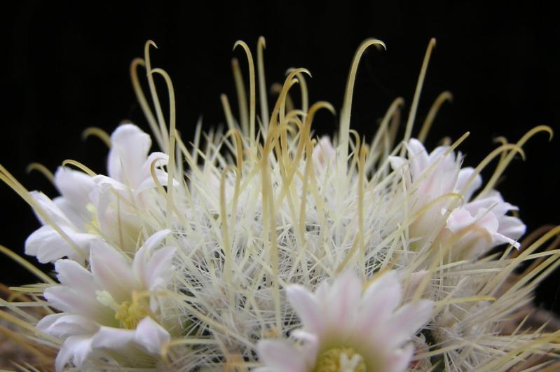 Cactus under carbonate. 20. M_cowp13