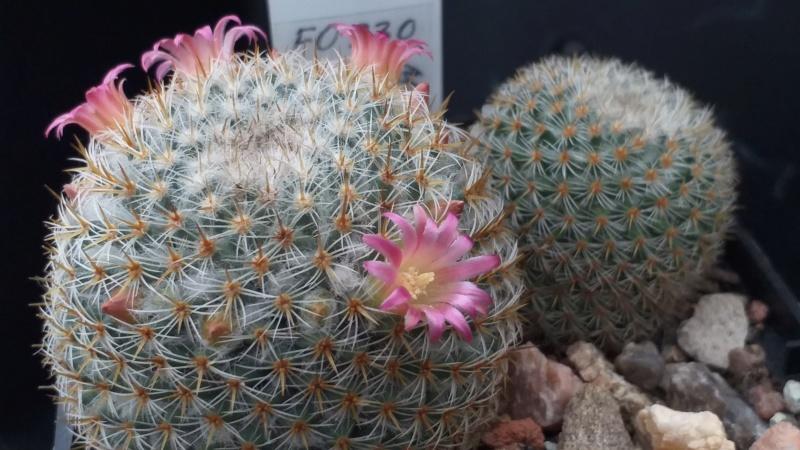 Cactus under carbonate. 18. M_dixa10