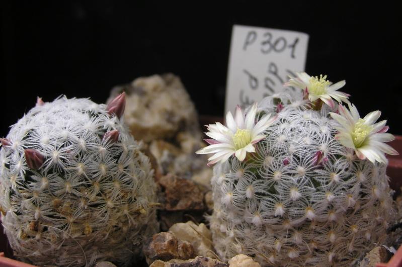 Cactus under carbonate. 18. M_duwe10