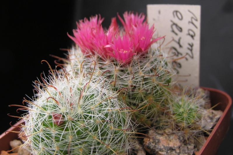 Cactus under carbonate. 18. M_eryt10