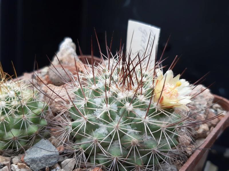Cactus under carbonate. 19. M_gate10