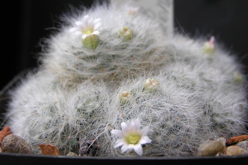 Cactus under carbonate. 18. M_glas10