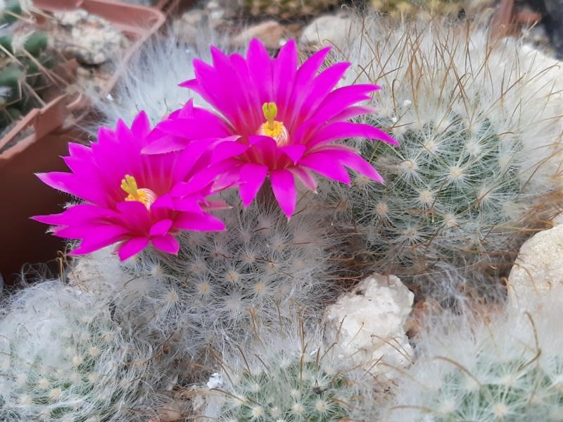 Cactus under carbonate. 19. M_guel11