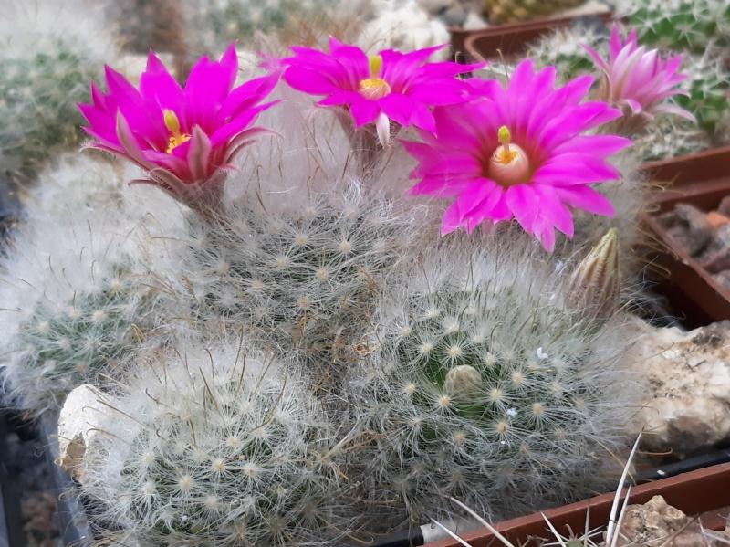 Cactus under carbonate. 19. M_guel12