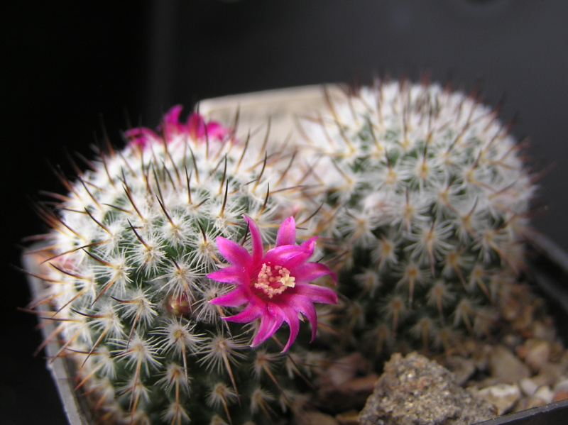 Cactus under carbonate. 18. M_haag10
