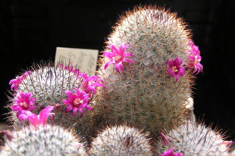 Cactus under carbonate. 20. M_haag12