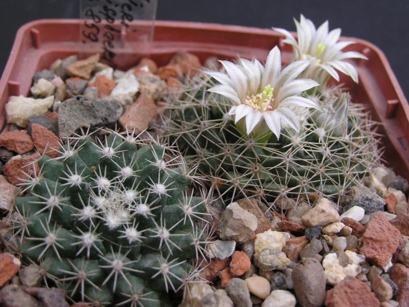 Cactus under carbonate. 17. Started! M_heyd11