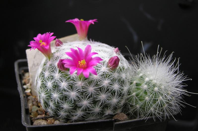 Cactus under carbonate. 20. M_humb13