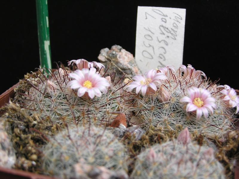 Cactus under carbonate. 17. Started! M_jali10