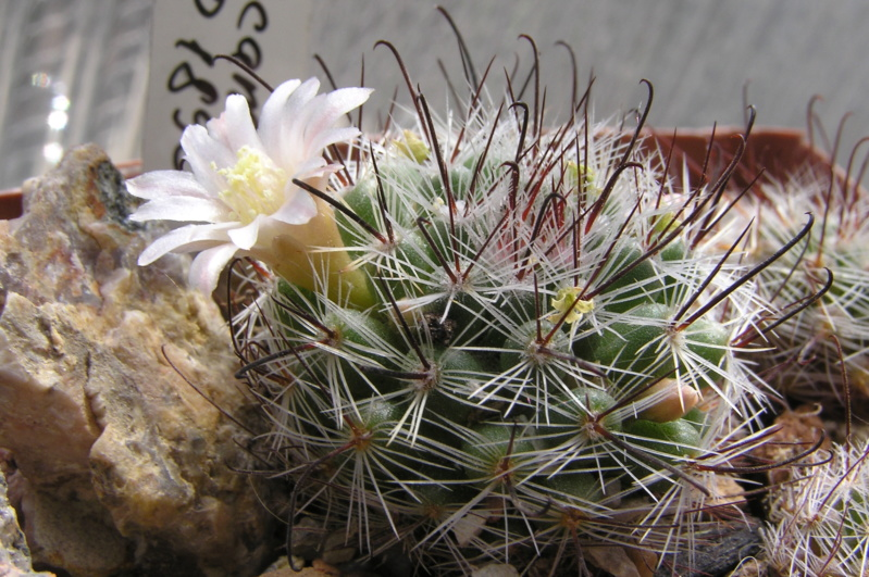 Cactus under carbonate. 17. Started! M_jali11