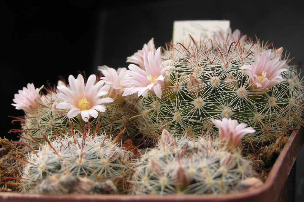 Cactus under carbonate. 18. M_jali12