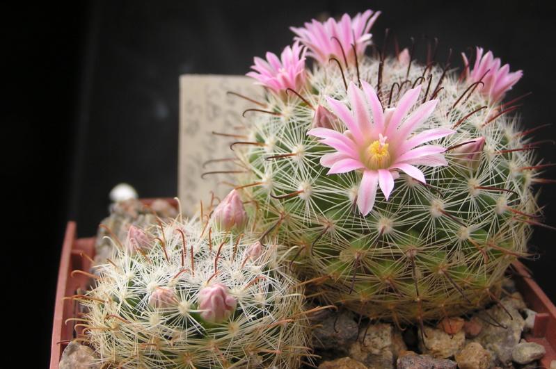 Cactus under carbonate. 18. M_jali13