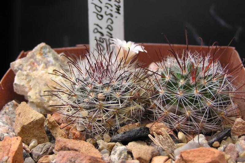Cactus under carbonate. 18. M_jali14