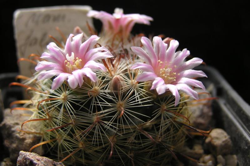 Cactus under carbonate. 20. M_jali16