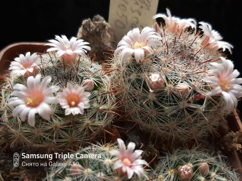 Cactus under carbonate. 20. M_jali17