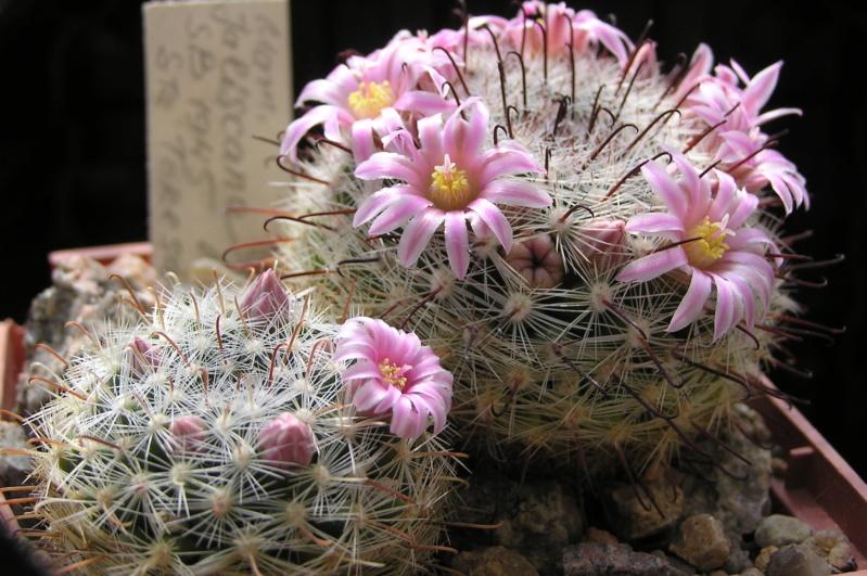 Cactus under carbonate. 20. M_jali19