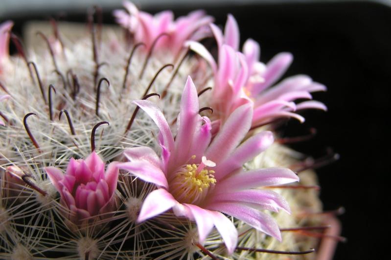 Cactus under carbonate. 20. M_jali20