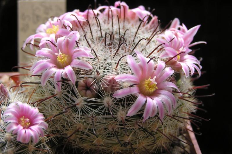 Cactus under carbonate. 20. M_jali21