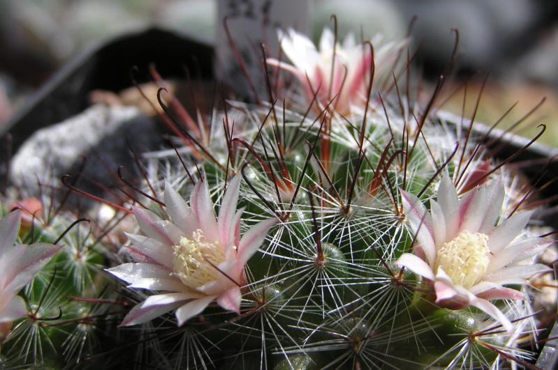 Cactus under carbonate. 20. M_jali22