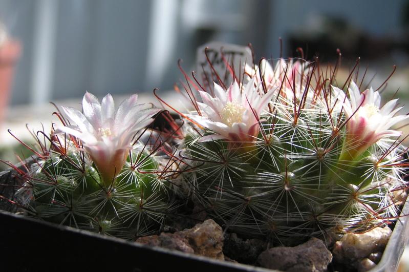 Cactus under carbonate. 20. M_jali23
