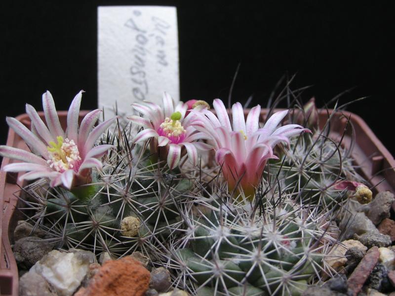 Cactus under carbonate. 17. Started! M_john10