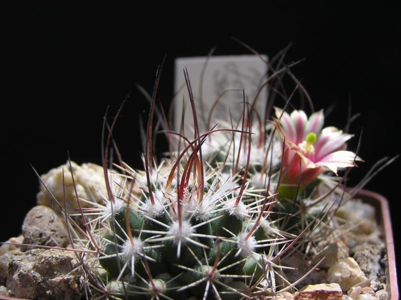 Cactus under carbonate. 17. Started! M_john11