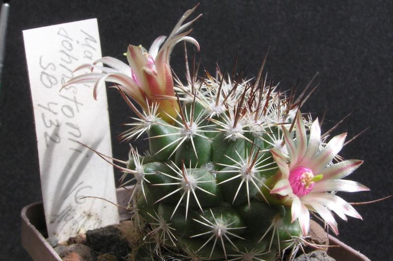 Cactus under carbonate. 17. Started! M_john12