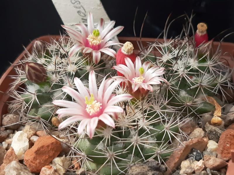 Cactus under carbonate. 18. M_john13