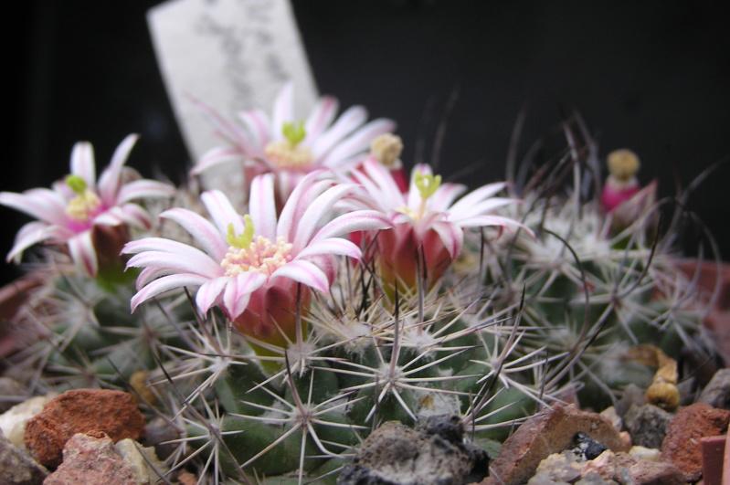 Cactus under carbonate. 19. M_john14
