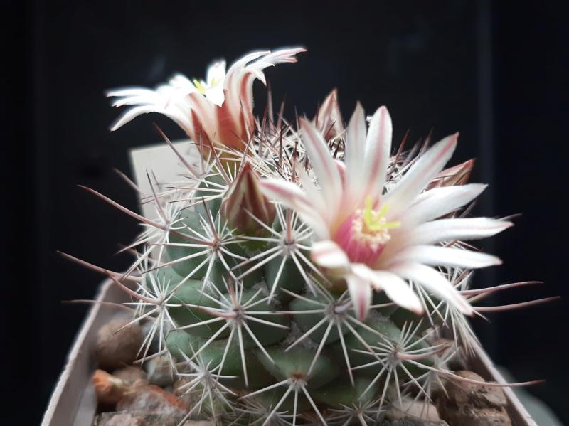Cactus under carbonate. 19. M_john16