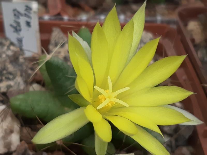Cactus under carbonate. 19. M_long10