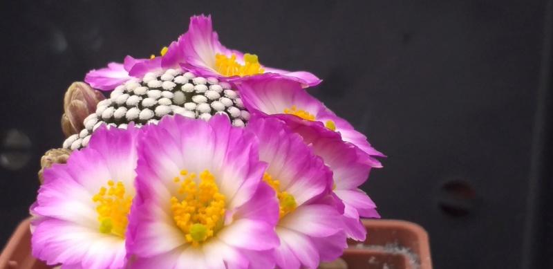 Cactus under carbonate. 18. M_luet10