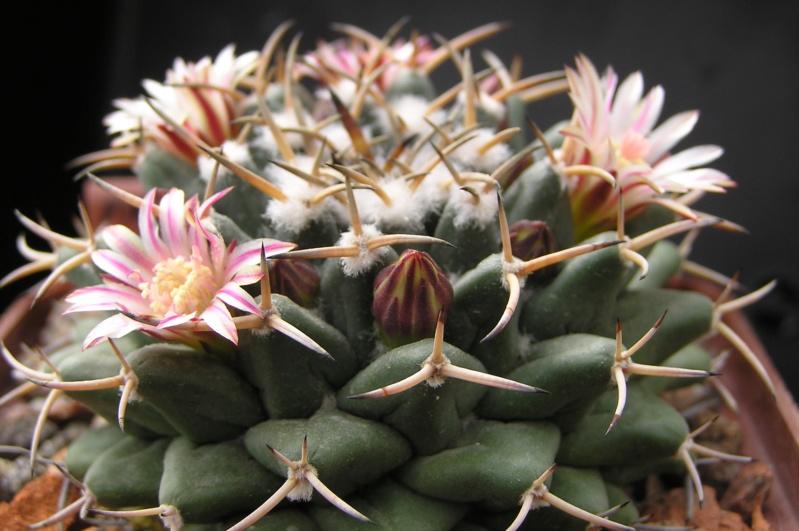 Cactus under carbonate. 18. M_magn10