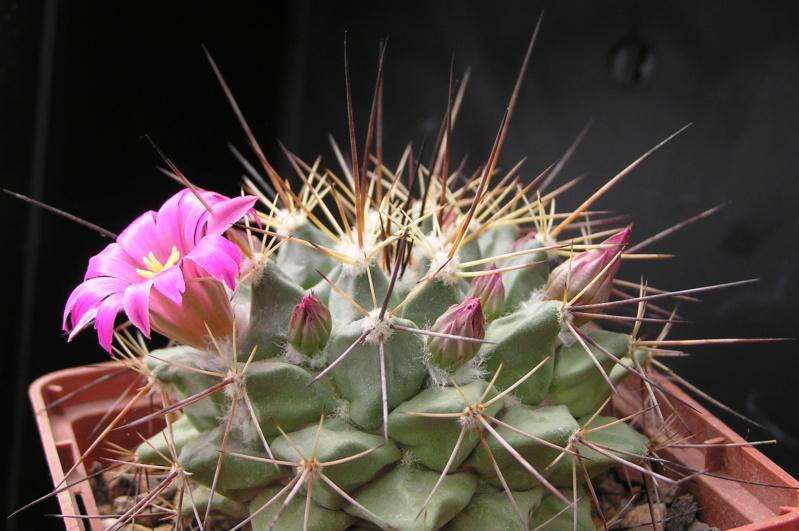Cactus under carbonate. 18. M_mela10