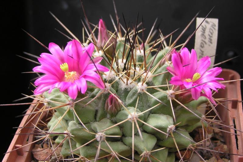 Cactus under carbonate. 18. M_mela11