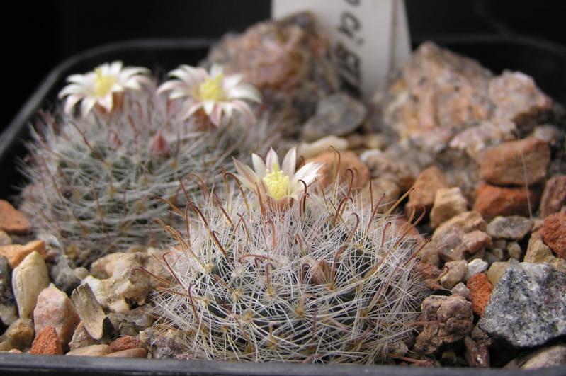 Cactus under carbonate. 19. M_mona10
