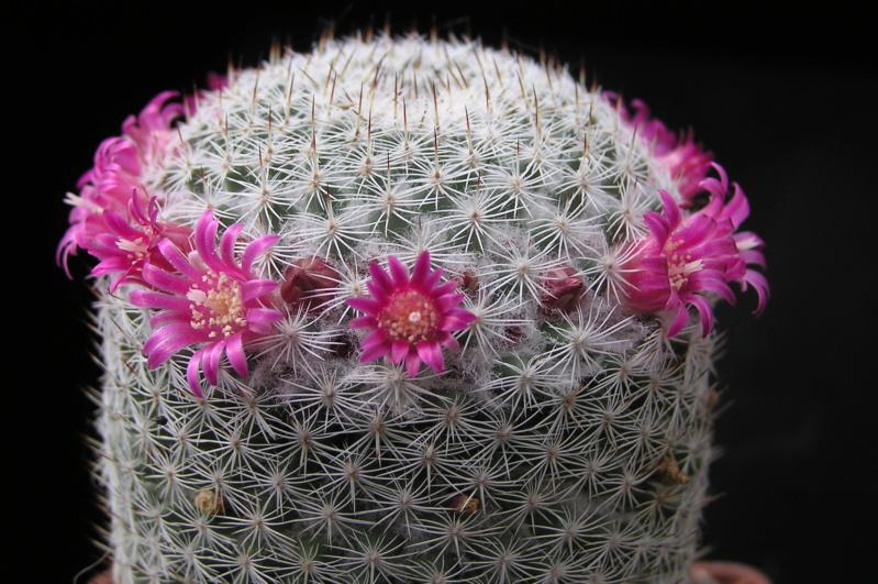 Cactus under carbonate. 19. M_mont10